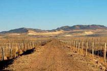 揭秘:科尔沁大草原变成沙漠之谜(组图)