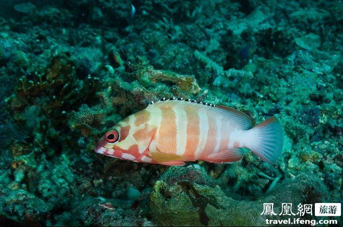 壁纸 动物 海底 海底世界 海洋馆 水族馆 鱼 鱼类 671_445