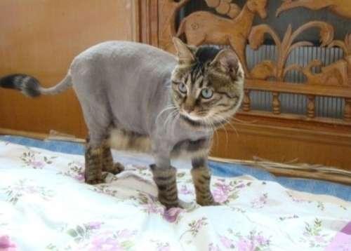 爆笑!小动物剃毛后的超囧模样