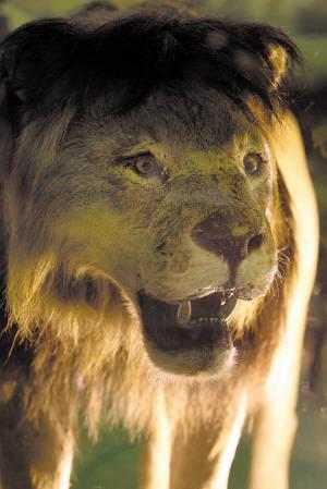 """威猛的""""狮子王""""与可爱的""""犀牛宝宝""""将在世博会接下来的140多天中在"""