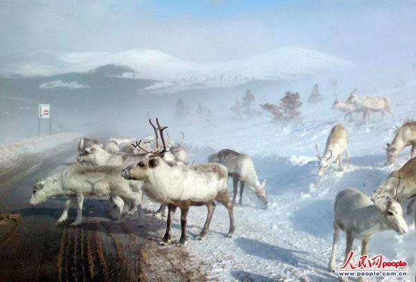 雪天动物们的简笔画