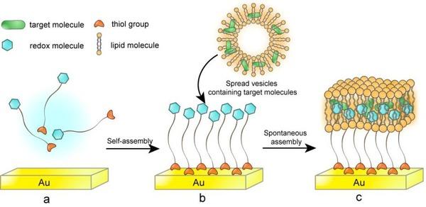 天然生物膜复杂的细微结构和其独特功能使得对