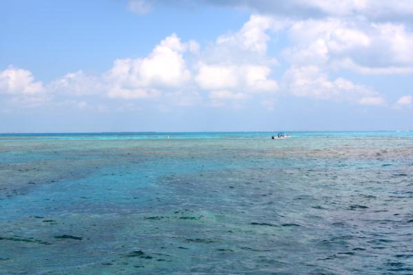 看似被石油泄漏污染的海域,其实暗色的部分是海底珊瑚礁