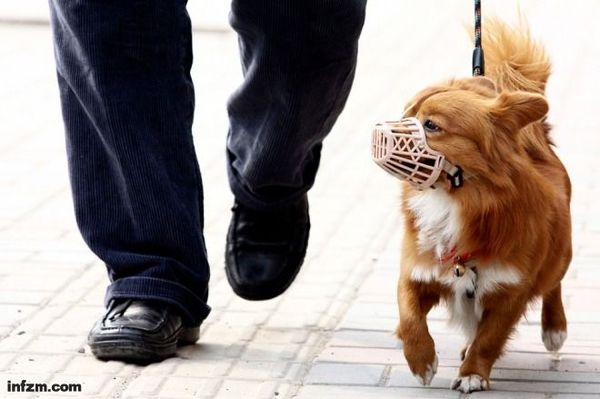 天津人为什么爱养狗