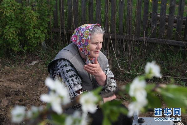 地处中东欧的白俄罗斯春天来得较晚。到5月中旬,全国大田里的春播工作才全面结束。而在农民自家的宅旁园地里,播种工作仍在进行中。大多数人仍然采用马拉犁铧的原始生产方式,也有些人用上了简陋的电动犁铧。男人干犁地的重活,老奶奶种土豆其实也不轻松。(明斯克分社首席记者张志强)