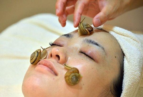 活蜗牛美容法图片