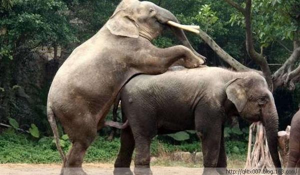 壁纸 大象 动物 600_350