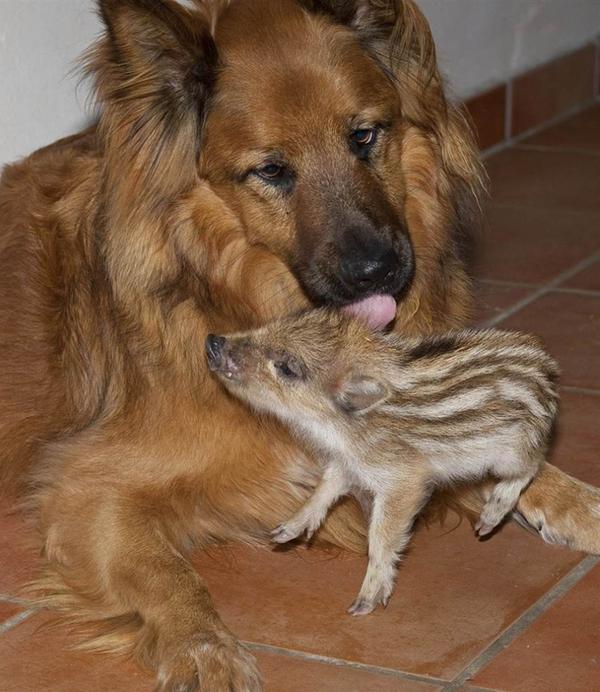 温情瞬间:动物的母爱_资讯频道