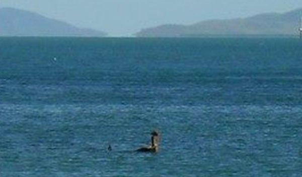 澳水面疑似尼斯湖水怪到此一游
