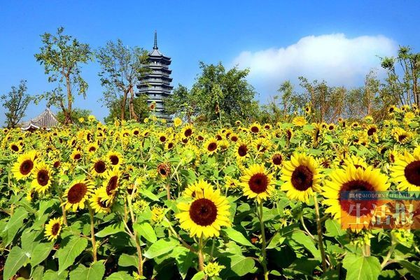 富有漓江风景的桂林园