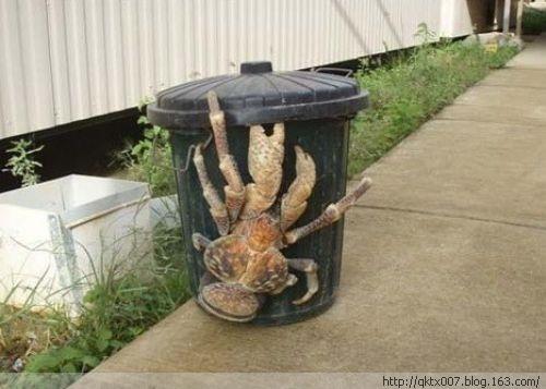 全球最不可思议的怪异动物