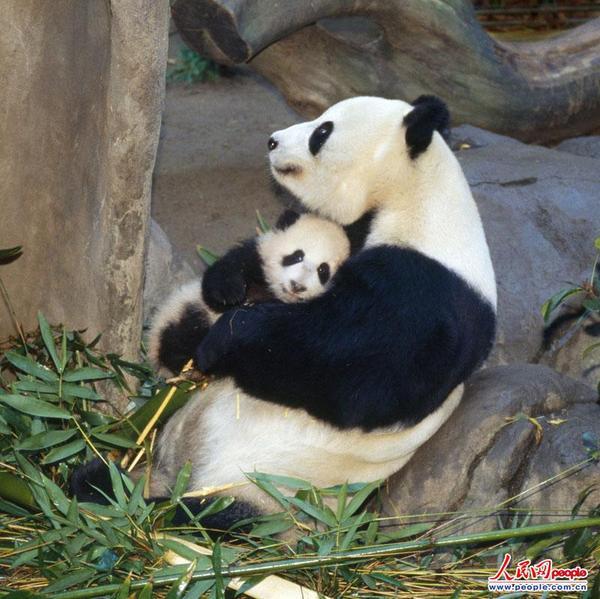 动物妈妈同样伟大