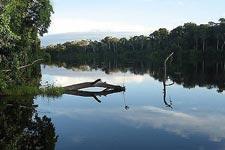 穿越亚马逊丛林
