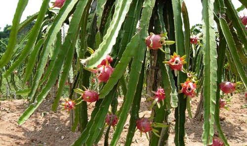 巴西莓:巴西莓长在一种棕榈树上,是一种人见人爱的,富含抗氧化酵素的