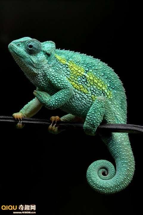 [多图]爬行两栖动物大特写照片