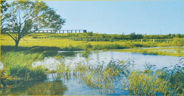 图为位于南四湖流域的滕州城郭河湿地。 资料图片