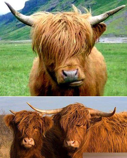 动物脸谱图片大全