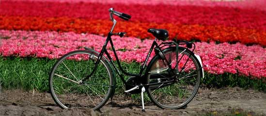 2011库肯霍夫公园:自行车租赁的注意事项