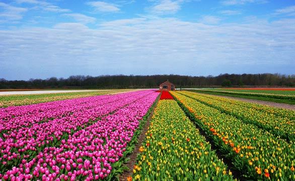 库肯霍夫公园花田区的美丽景色