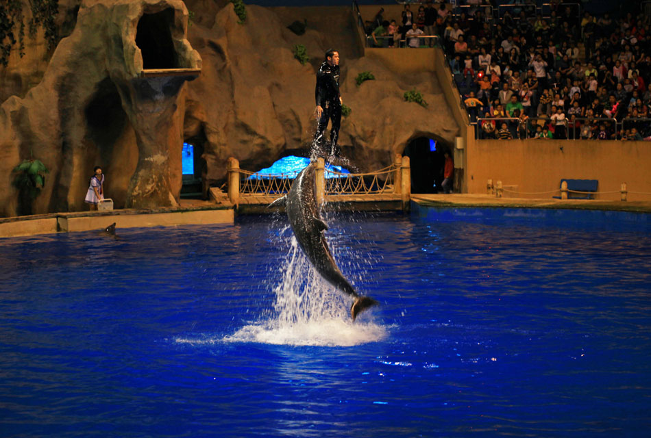 高清:足不出户看北京动物园海豚表演(1/11)